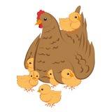 Henne mit Hühnern Stockfoto