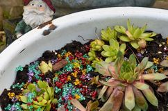 Hennen u. Küken-Blumen Stockfotos