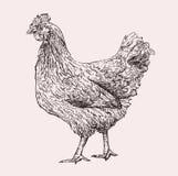 Hennenhand gezeichnet Stockbild