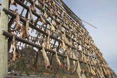 Henningsvaer  fish racks Stock Image