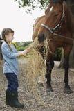 Heno de alimentación del caballo de la muchacha Imagen de archivo