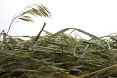 Heno de la hierba contra el fondo blanco Imagenes de archivo