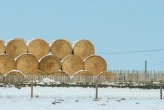 Heno en la nieve Imagen de archivo libre de regalías