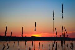 Heno salvaje silueteado por una puesta del sol de la tarde sobre un lago Imágenes de archivo libres de regalías