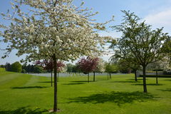 HENRI-CHAPELLE, BELGIUM - MAY 2016. Spring at the Military Cemetery. Henri-Chapelle, Belgium. Blooming trees at the American Military Cemetery and Memorial Stock Photo