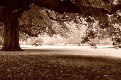 Henrietta Park, Bath, in the rain Royalty Free Stock Photos
