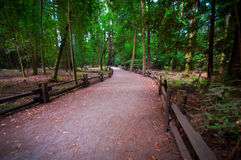 Henry Cowell Redwoods State Park, California Royalty Free Stock Photo