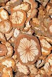 Henry magnoliavine stem Royalty Free Stock Image