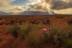 Henry Mountains with a flowering cactus. Stock Photo