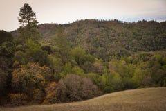 Henry W Coe stanu park blisko Morgan wzgórza CA obrazy stock