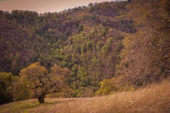 Henry W Coe State Park near Morgan Hill CA Stock Photography