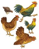 Hens and cocks Royalty Free Stock Images