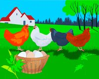 Hens, eggs and farm background stock illustration
