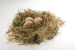 Hens eggs on poultry deep litter Royalty Free Stock Image