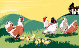 Hens in a meadow Stock Image