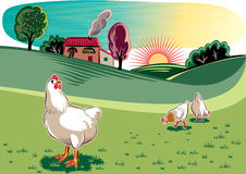 Hens in a meadow Royalty Free Stock Photos
