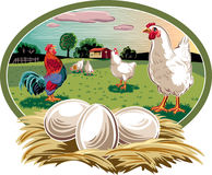 Hens and nest with eggs. Stock Image