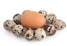 Hens and quails eggs Royalty Free Stock Image