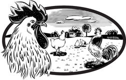 Hens and rooster, that roam free in a meadow. Stock Photo