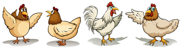 Hens and rooster Royalty Free Stock Photos