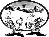 Hens and two roosters fighting. Stock Photos