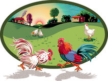 Hens and two roosters fighting. Royalty Free Stock Photo