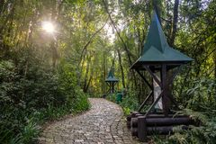 Hensel和Gretel落后树丛Alemao德语森林公园-库里奇巴,巴拉那,巴西的Trilha若昂e玛丽亚 库存图片