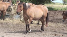Henson horse Stock Photos