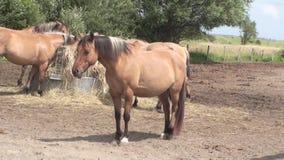 Henson horse Royalty Free Stock Image