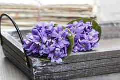 Hepatica flowers, pretty small bouquet. Stock Photography