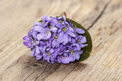 Hepatica flowers, pretty small bouquet. Stock Photo