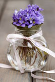 Hepatica flowers, pretty small bouquet in a vase. Stock Images