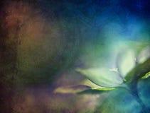 Hepatica kwiat Fotografia Royalty Free