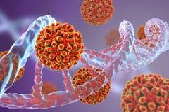 Heptitis b wirusy i DNA molekuła Zdjęcia Stock