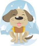 Herói bonito do cão do salvamento da neve Foto de Stock