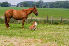 Her horse and baby Stock Image