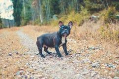 Curious Amanda. Royalty Free Stock Photo