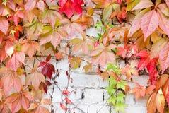 hera Cinco-com folhas Fotos de Stock