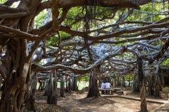 Hera da árvore Imagens de Stock Royalty Free