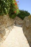 Hera e flores na parede de pedra Imagens de Stock