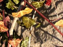 Hera e rocha Imagem de Stock