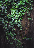 Hera em torno da árvore fotografia de stock
