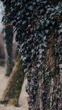 Hera em uma árvore próximo um lago fotos de stock royalty free