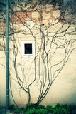 Hera em uma parede Imagem de Stock