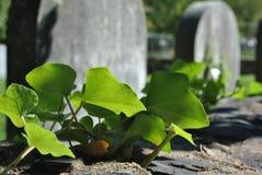 Hera macro em uma parede em um cemitério Foto de Stock