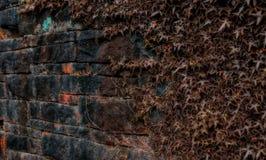 Hera na parede Fotos de Stock Royalty Free