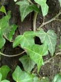 Hera no tronco de árvore Fotografia de Stock