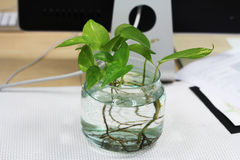 Hera no vaso de vidro Imagem de Stock Royalty Free