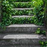 Hera que cresce ao longo das escadas do cimento Imagem de Stock