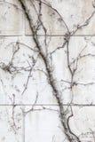 Hera secada na parede de tijolo branca na estação do outono imagem de stock royalty free